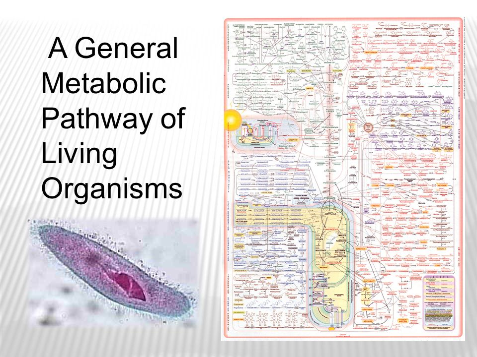 A General Metabolic Pathway of Living Organisms