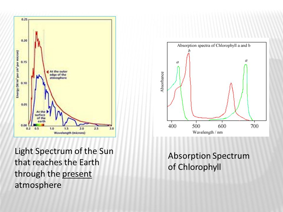 Light Spectrum of the Sun that reaches the Earth through the present atmosphere Absorption Spectrum of Chlorophyll