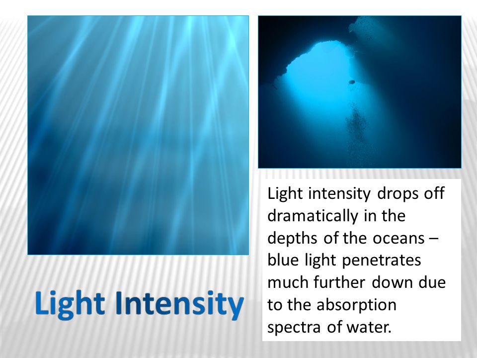 Light intensity drops off dramatically in the depths of the oceans – blue light penetrates much further down due to the absorption spectra of water.
