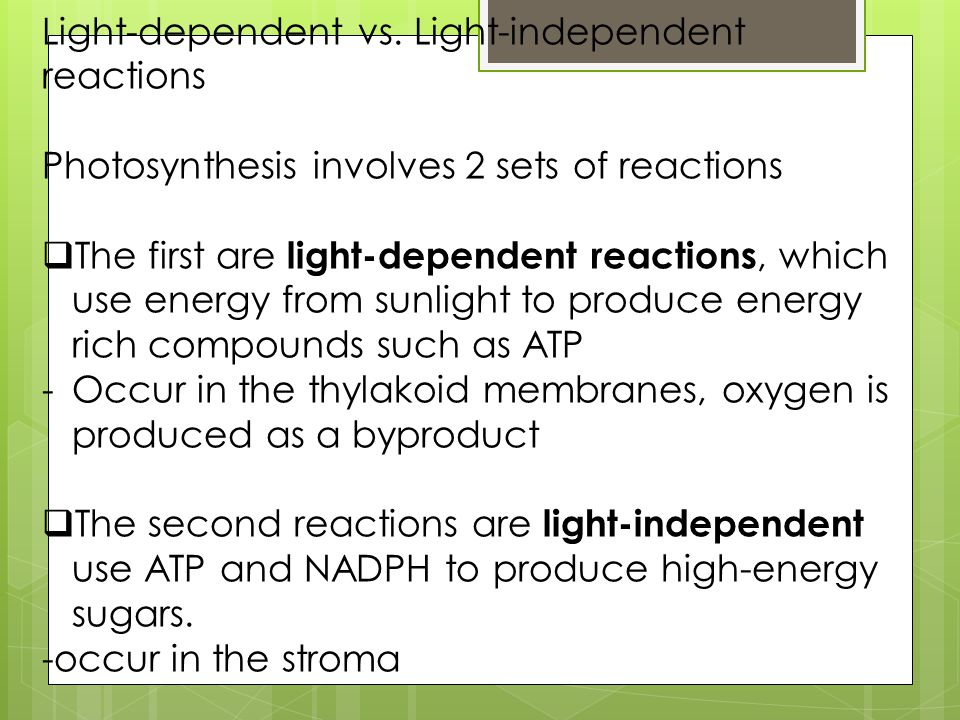 Light-dependent vs. Light-independent reactions Photosynthesis involves 2 sets of reactions  The first are light-dependent reactions, which use energ