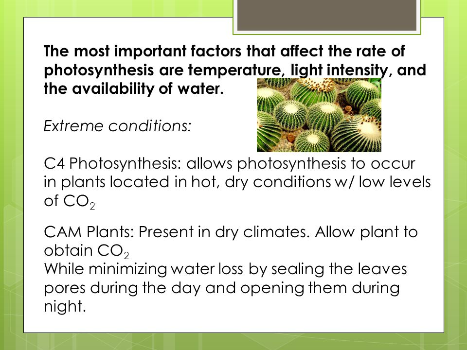 The most important factors that affect the rate of photosynthesis are temperature, light intensity, and the availability of water. Extreme conditions: