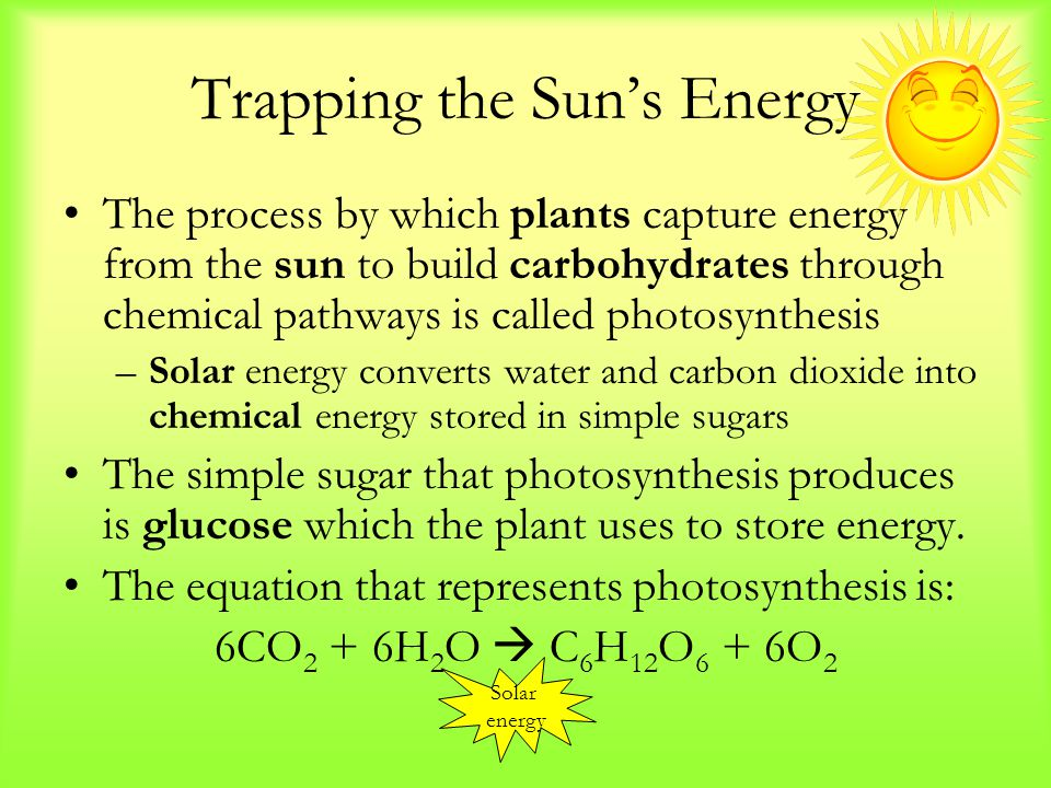 Trapping the Sun's Energy The process by which plants capture energy from the sun to build carbohydrates through chemical pathways is called photosynthesis –Solar energy converts water and carbon dioxide into chemical energy stored in simple sugars The simple sugar that photosynthesis produces is glucose which the plant uses to store energy.