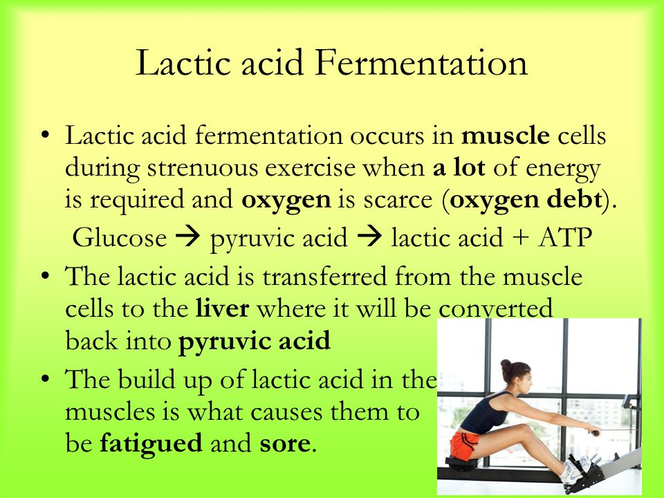 Lactic acid Fermentation Lactic acid fermentation occurs in muscle cells during strenuous exercise when a lot of energy is required and oxygen is scarce (oxygen debt).