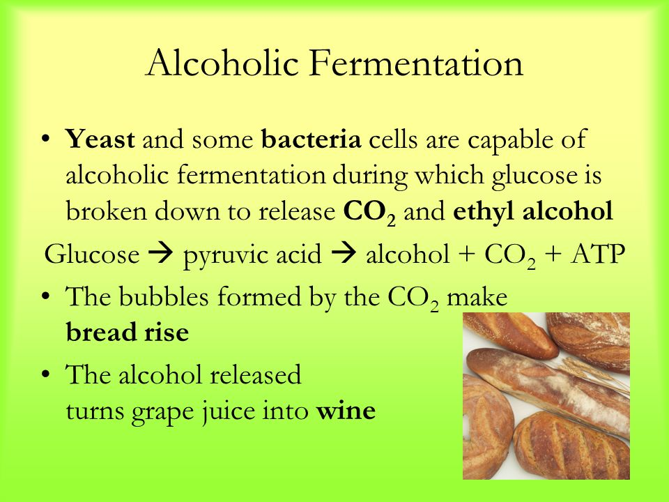 Alcoholic Fermentation Yeast and some bacteria cells are capable of alcoholic fermentation during which glucose is broken down to release CO 2 and eth