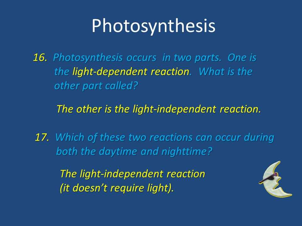 Photosynthesis 16. Photosynthesis occurs in two parts. One is the light-dependent reaction. What is the the light-dependent reaction. What is the othe