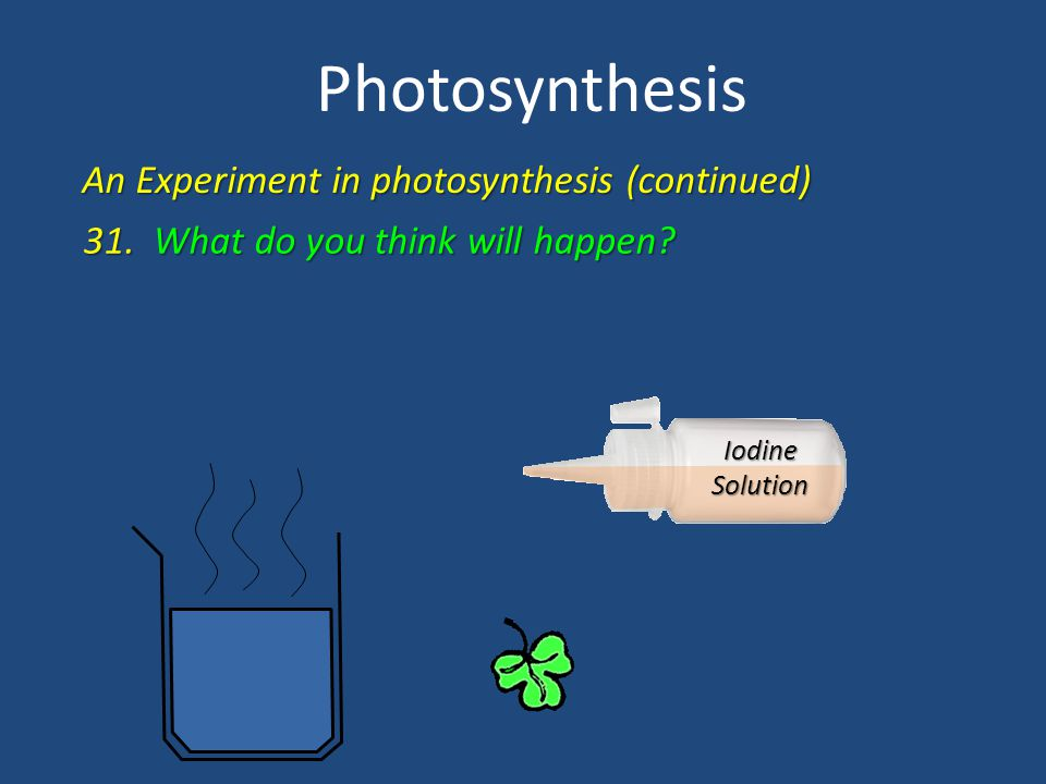 Photosynthesis An Experiment in photosynthesis (continued) 31. What do you think will happen? Iodine Solution
