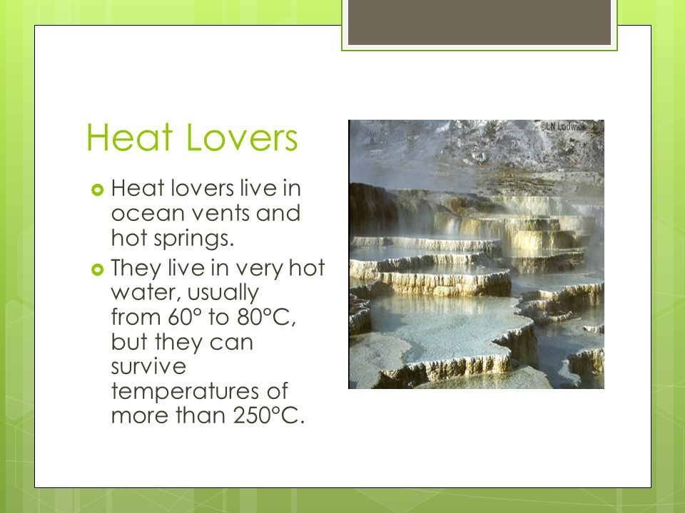 Heat Lovers  Heat lovers live in ocean vents and hot springs.  They live in very hot water, usually from 60° to 80°C, but they can survive temperatu