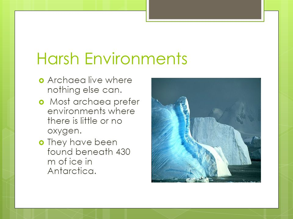 Harsh Environments  Archaea live where nothing else can.  Most archaea prefer environments where there is little or no oxygen.  They have been foun
