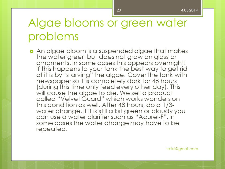 Algae blooms or green water problems  An algae bloom is a suspended algae that makes the water green but does not grow on glass or ornaments.