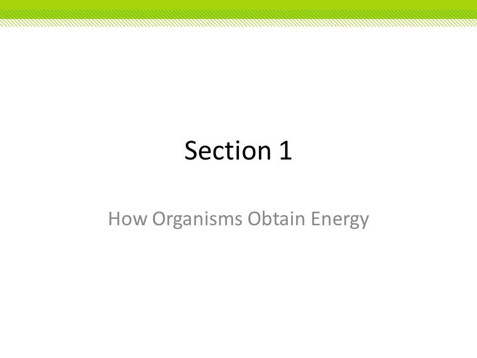 Section 1 How Organisms Obtain Energy