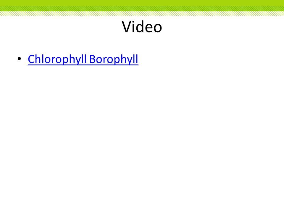 Video Chlorophyll Borophyll