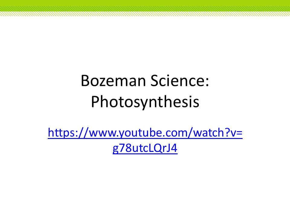 Bozeman Science: Photosynthesis https://www.youtube.com/watch?v= g78utcLQrJ4