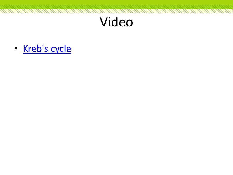 Video Kreb's cycle