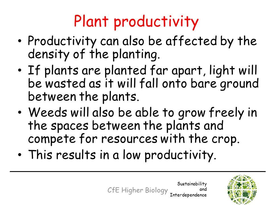 Plant productivity Productivity can also be affected by the density of the planting. If plants are planted far apart, light will be wasted as it will