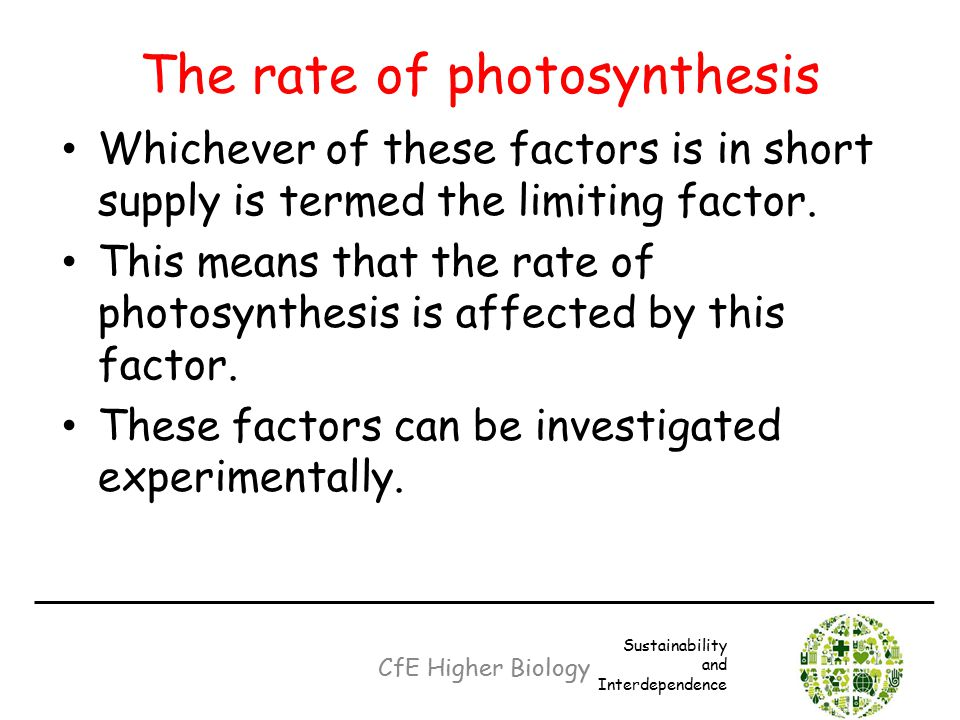 The rate of photosynthesis Whichever of these factors is in short supply is termed the limiting factor. This means that the rate of photosynthesis is