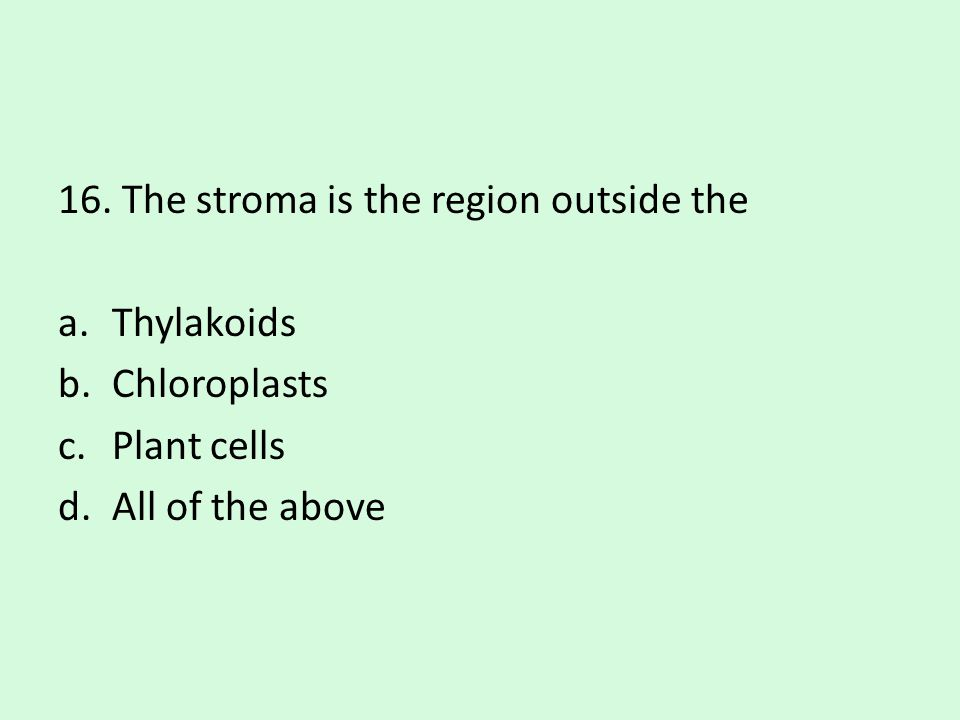 16. The stroma is the region outside the a.Thylakoids b.Chloroplasts c.Plant cells d.All of the above
