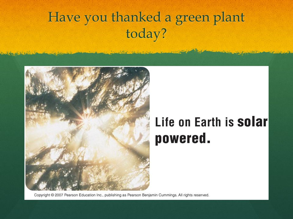 Have you thanked a green plant today?