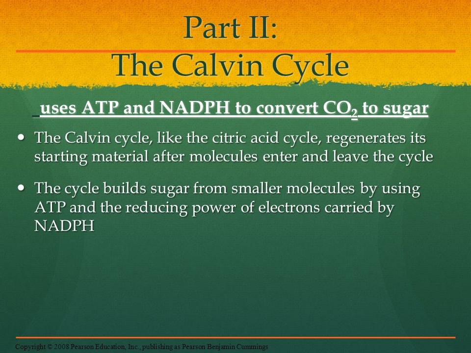 Part II: The Calvin Cycle uses ATP and NADPH to convert CO 2 to sugar The Calvin cycle, like the citric acid cycle, regenerates its starting material