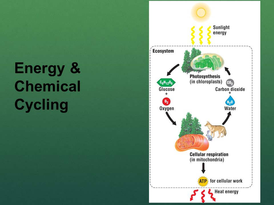 Energy & Chemical Cycling