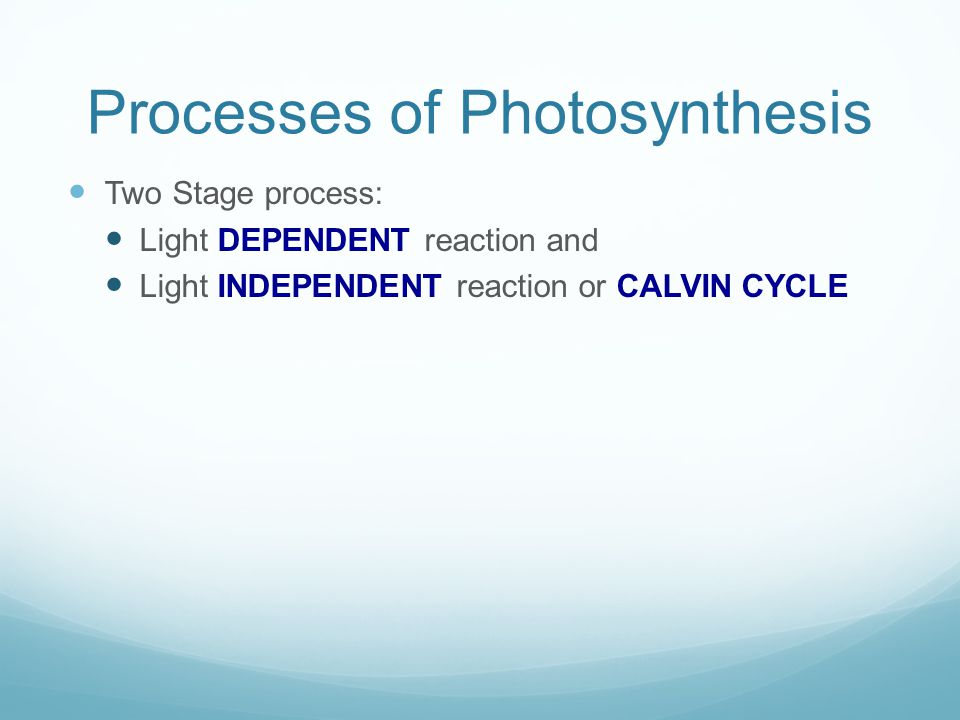 Processes of Photosynthesis Two Stage process: Light DEPENDENT reaction and Light INDEPENDENT reaction or CALVIN CYCLE