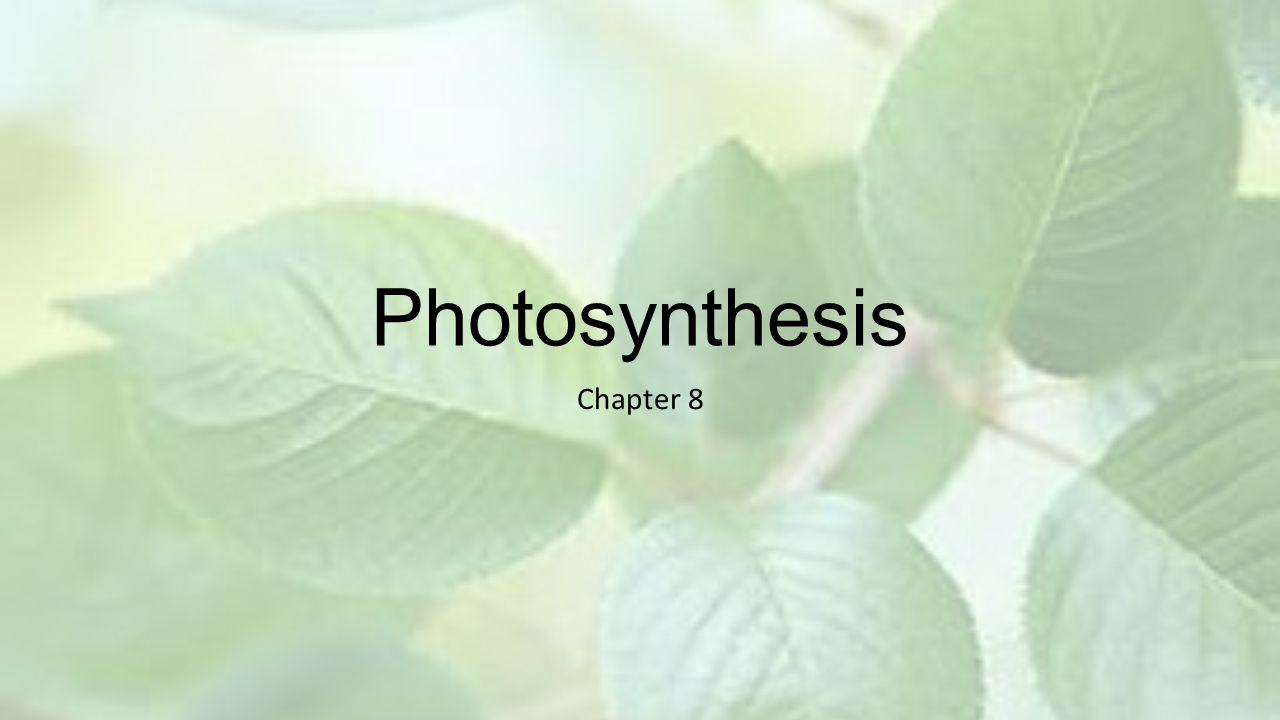 Light Reactions 1.The first stage of photosynthesis is the LIGHT REACTIONS.