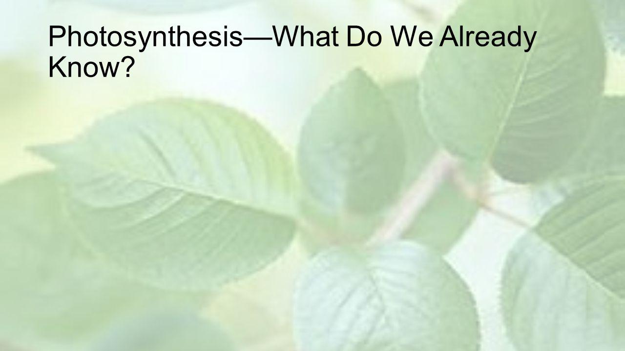 Photosynthesis Brain Pop
