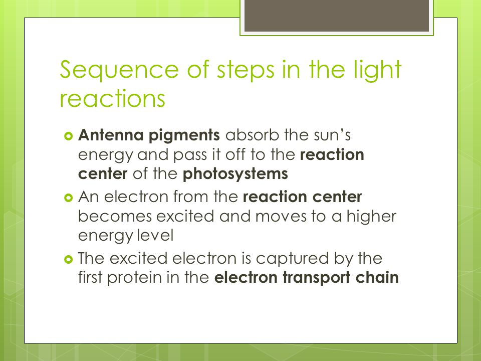Sequence of steps in the light reactions  Antenna pigments absorb the sun's energy and pass it off to the reaction center of the photosystems  An el