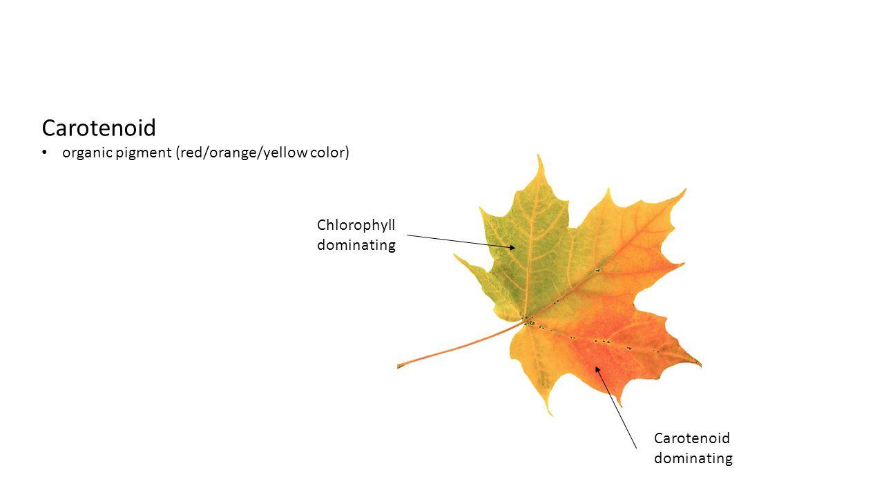 Chlorophyll dominating Carotenoid dominating Carotenoid organic pigment (red/orange/yellow color)