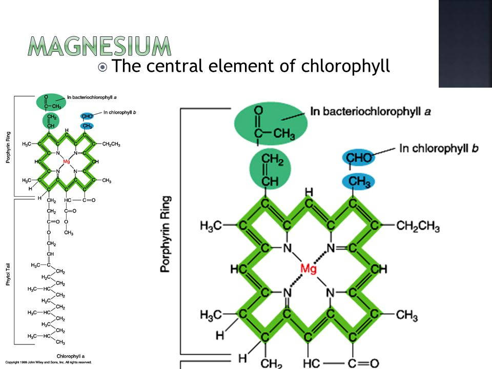  The central element of chlorophyll