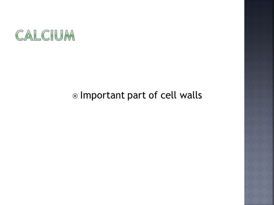  Important part of cell walls