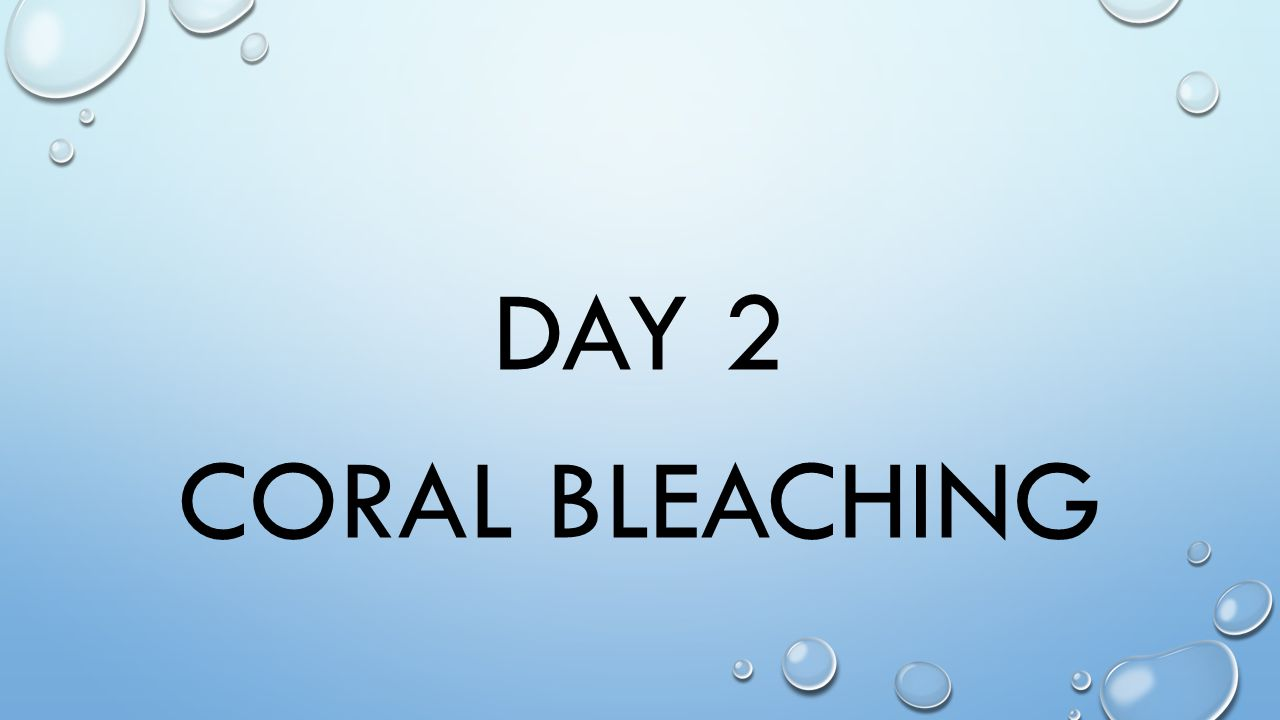 DAY 2 CORAL BLEACHING