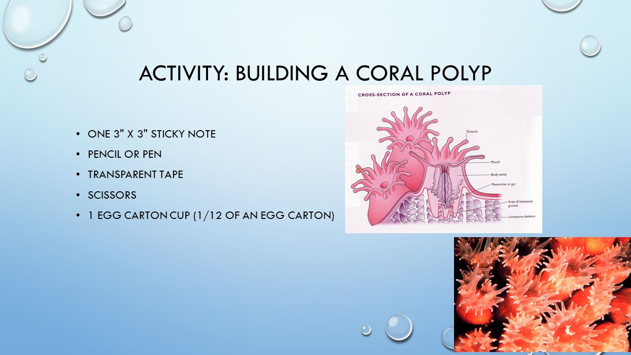 ACTIVITY: BUILDING A CORAL POLYP ONE 3