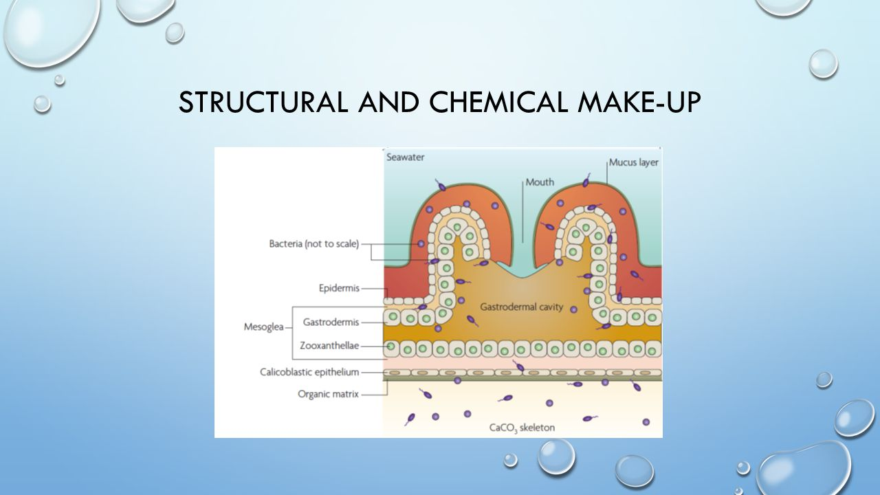 STRUCTURAL AND CHEMICAL MAKE-UP