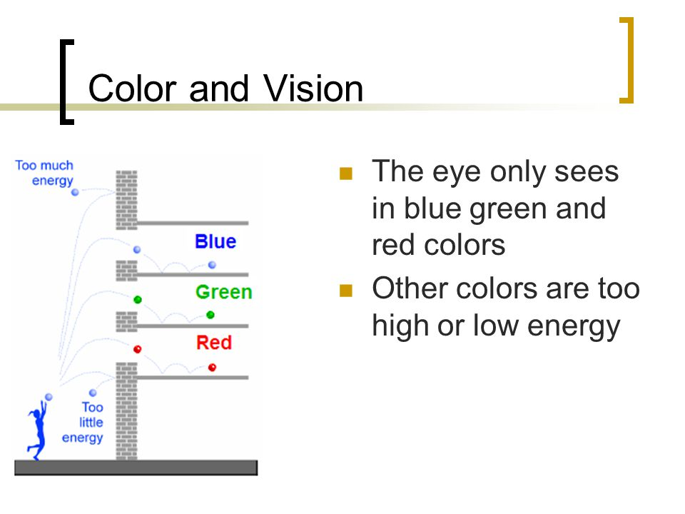 How the human eye sees color The retina in the back of the eye contains photoreceptors.