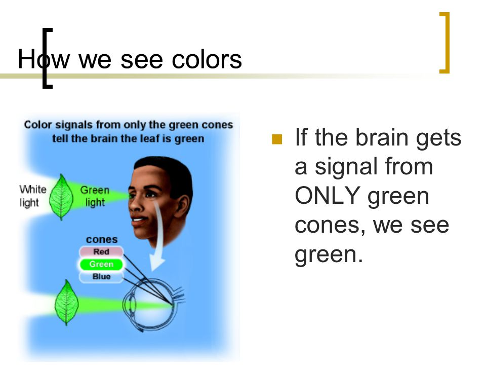 How we see other colors All the different shades of color we can see are made by changing the proportions of red, green, and blue.