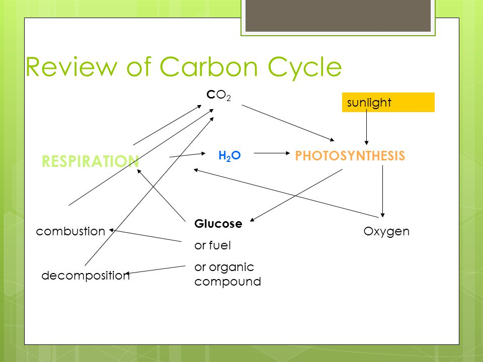 Review of Carbon Cycle PHOTOSYNTHESIS RESPIRATION CO2CO2 Glucose or fuel or organic compound combustion decomposition sunlight Oxygen H2OH2O