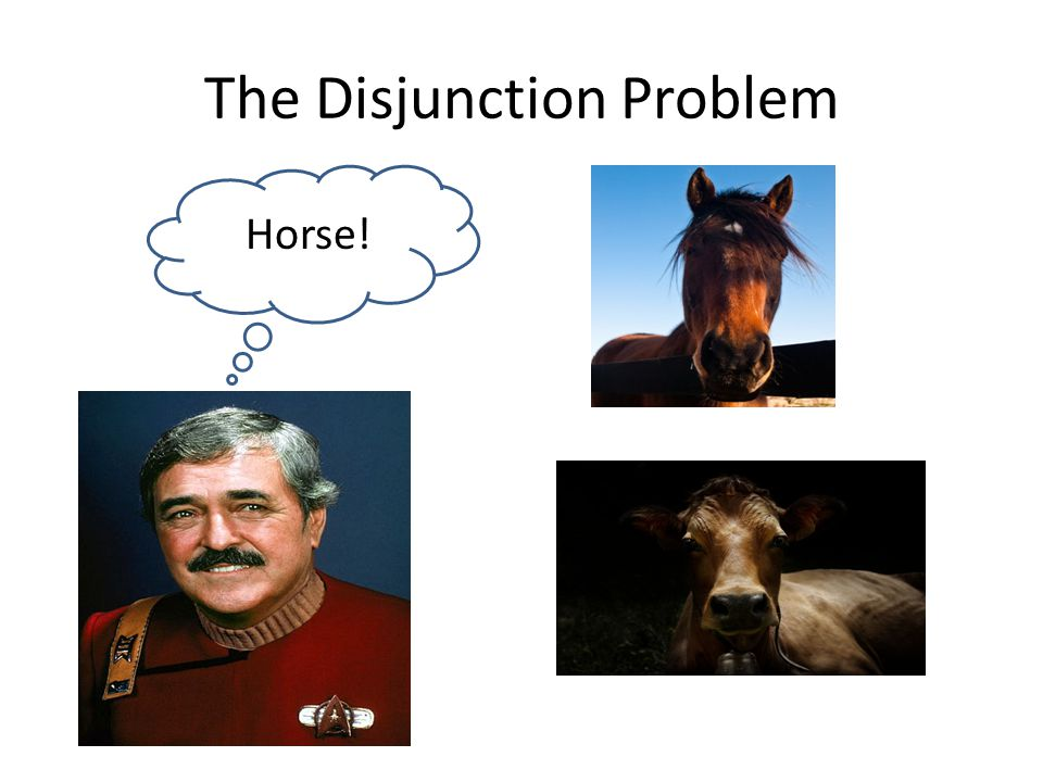 The Disjunction Problem Horse!