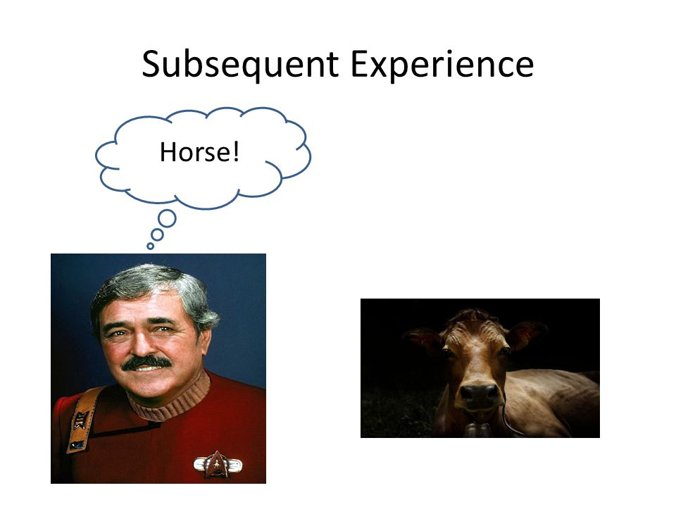Subsequent Experience Horse!