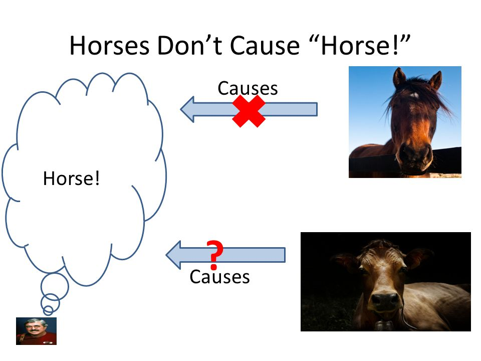Horses Don't Cause Horse! Horse! Causes