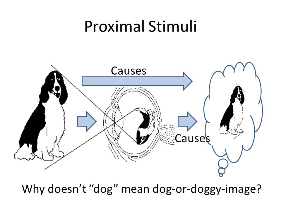 Proximal Stimuli Why doesn't dog mean dog-or-doggy-image Causes