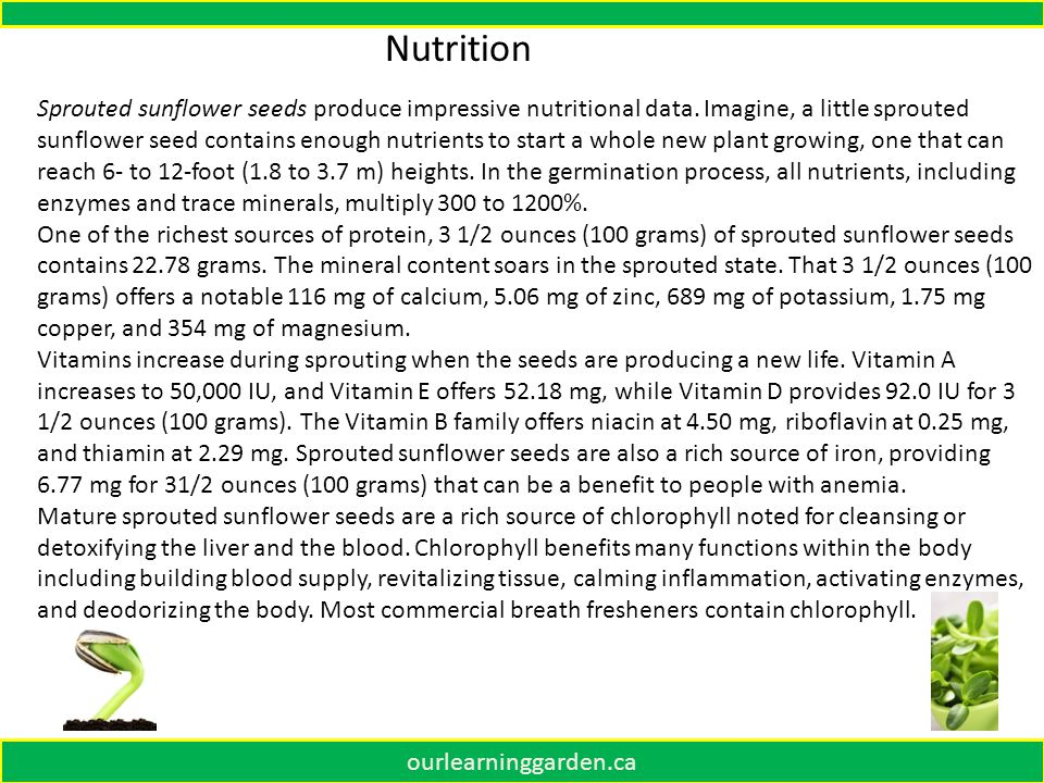 ourlearninggarden.ca Sprouted sunflower seeds produce impressive nutritional data.