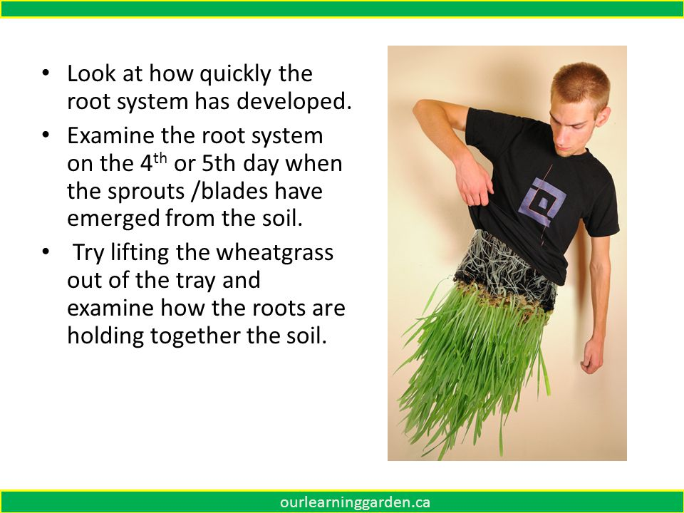Look at how quickly the root system has developed.