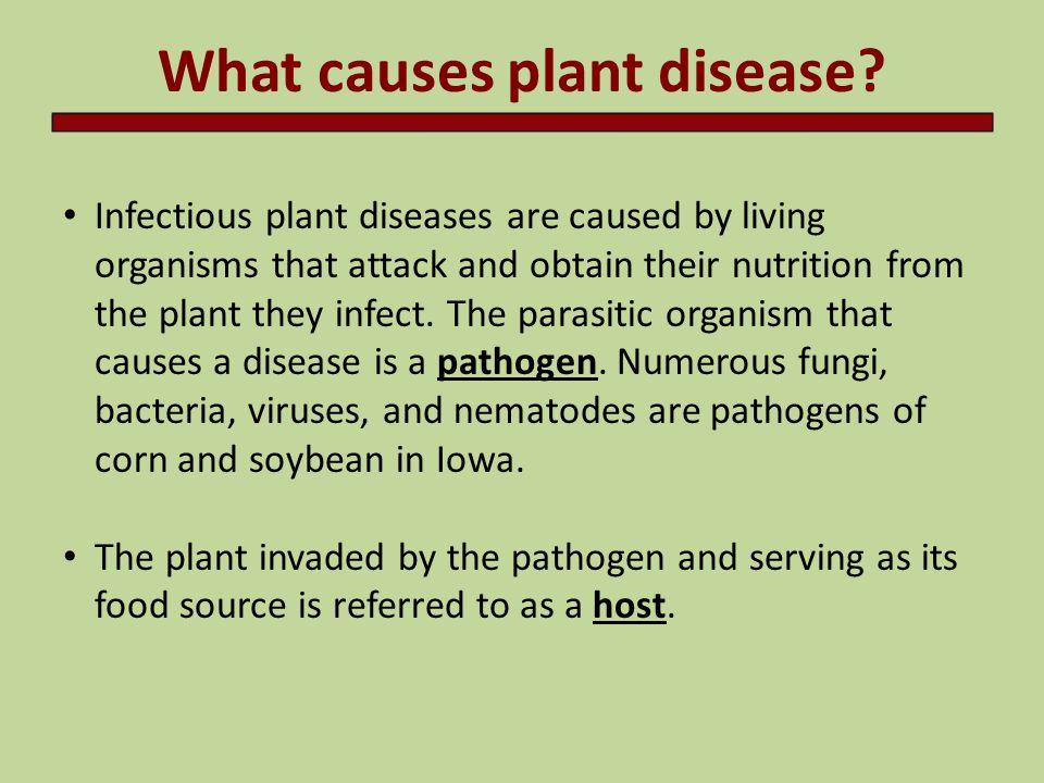 Types of pathogens Nematodes Bacteria Viruses Fungi