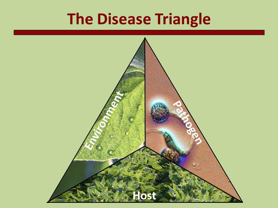 The Disease Triangle Soybean rust