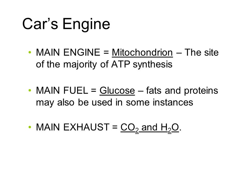 Car's Engine MAIN ENGINE = Mitochondrion – The site of the majority of ATP synthesis MAIN FUEL = Glucose – fats and proteins may also be used in some instances MAIN EXHAUST = CO 2 and H 2 O.