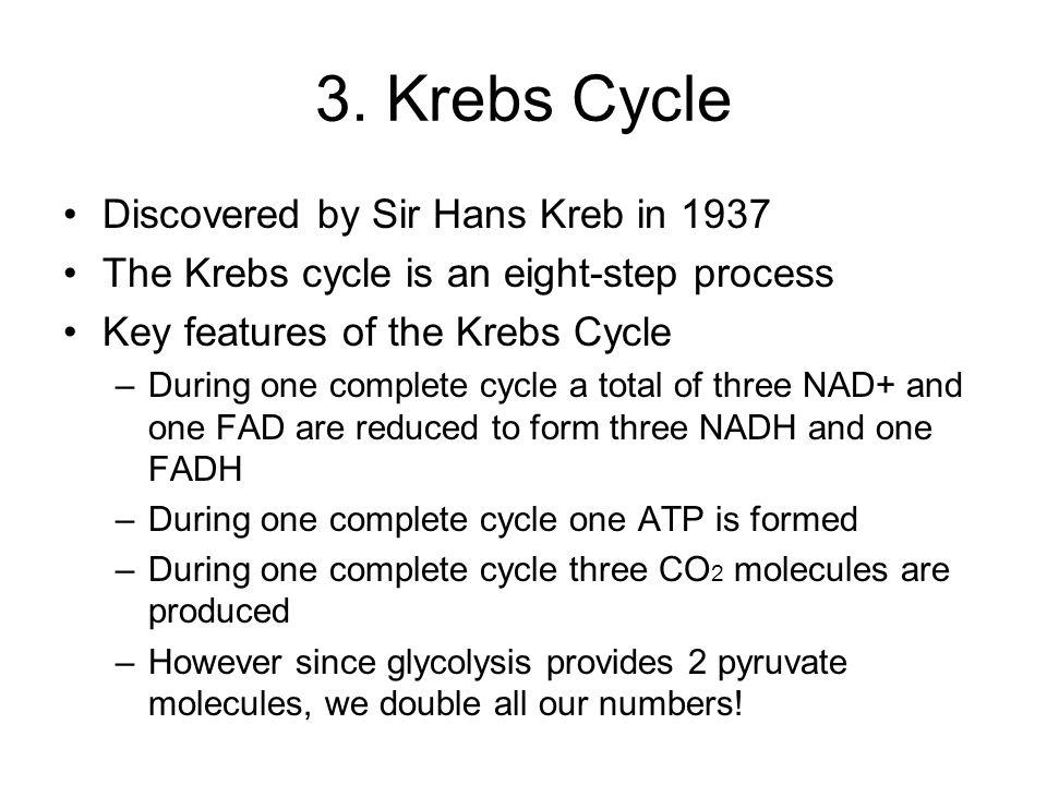 3. Krebs Cycle Discovered by Sir Hans Kreb in 1937 The Krebs cycle is an eight-step process Key features of the Krebs Cycle –During one complete cycle