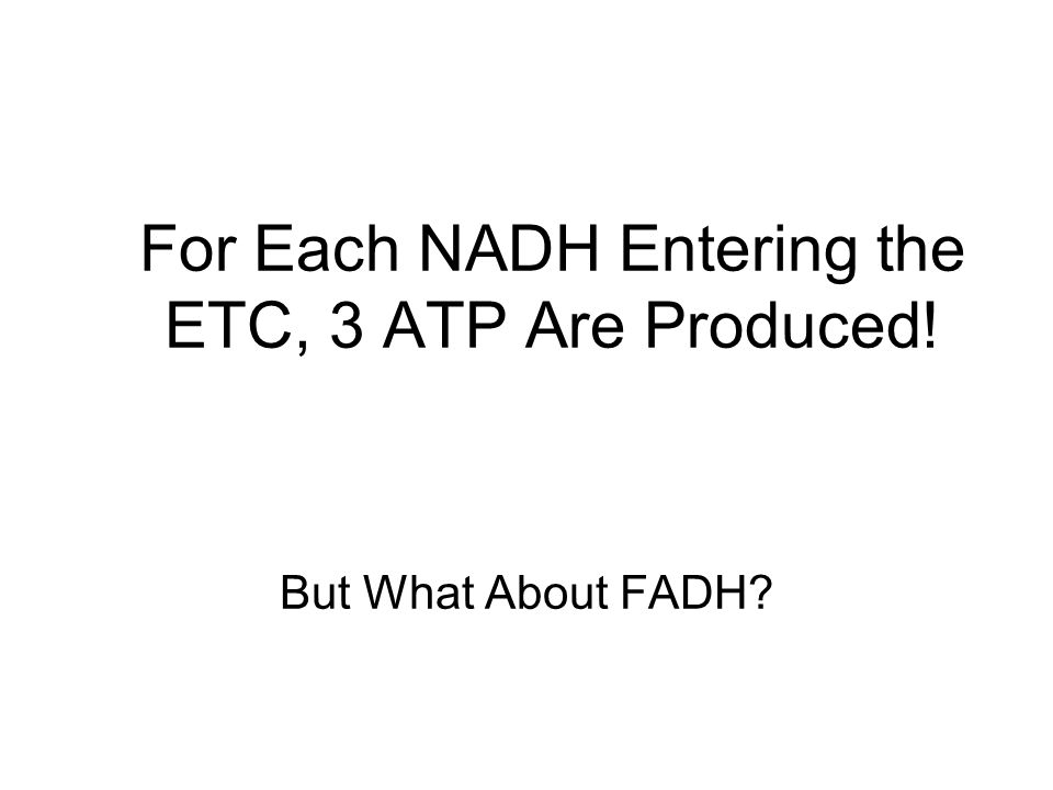 For Each NADH Entering the ETC, 3 ATP Are Produced! But What About FADH?