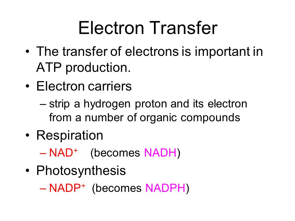 Electron Transfer The transfer of electrons is important in ATP production.