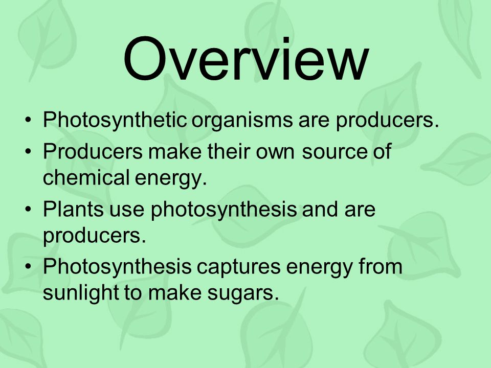 Photosynthetic organisms are producers. Producers make their own source of chemical energy.