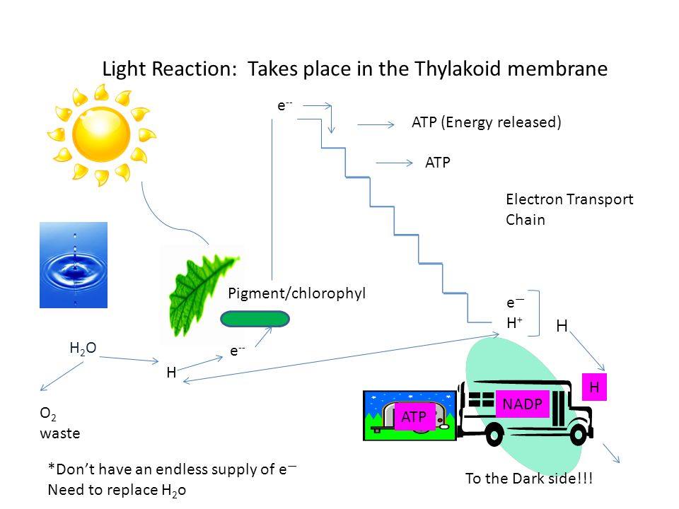 PHOTOSYNTHESIS OVERVIEW Pearson Education Inc; Publishing as Prentice Hall